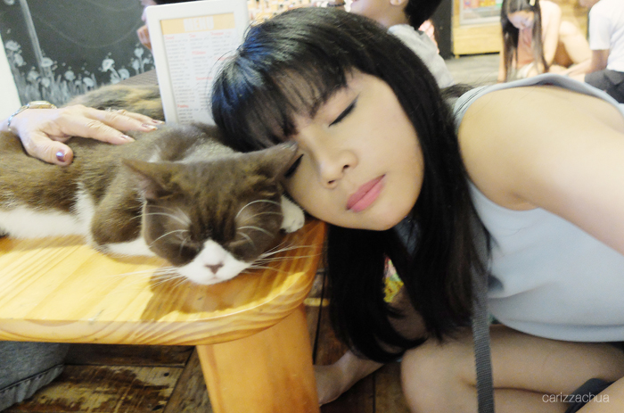 miao-cat-cafe-35